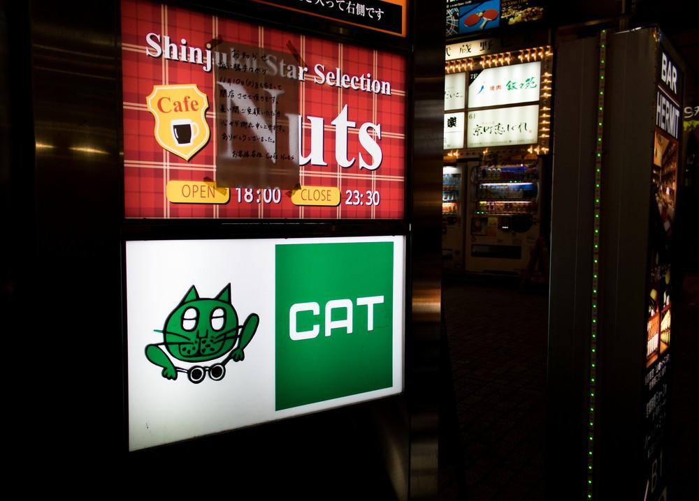 Old+Cat_-2.jpg